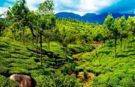 پاکستان میں جنگلات کی بحالی